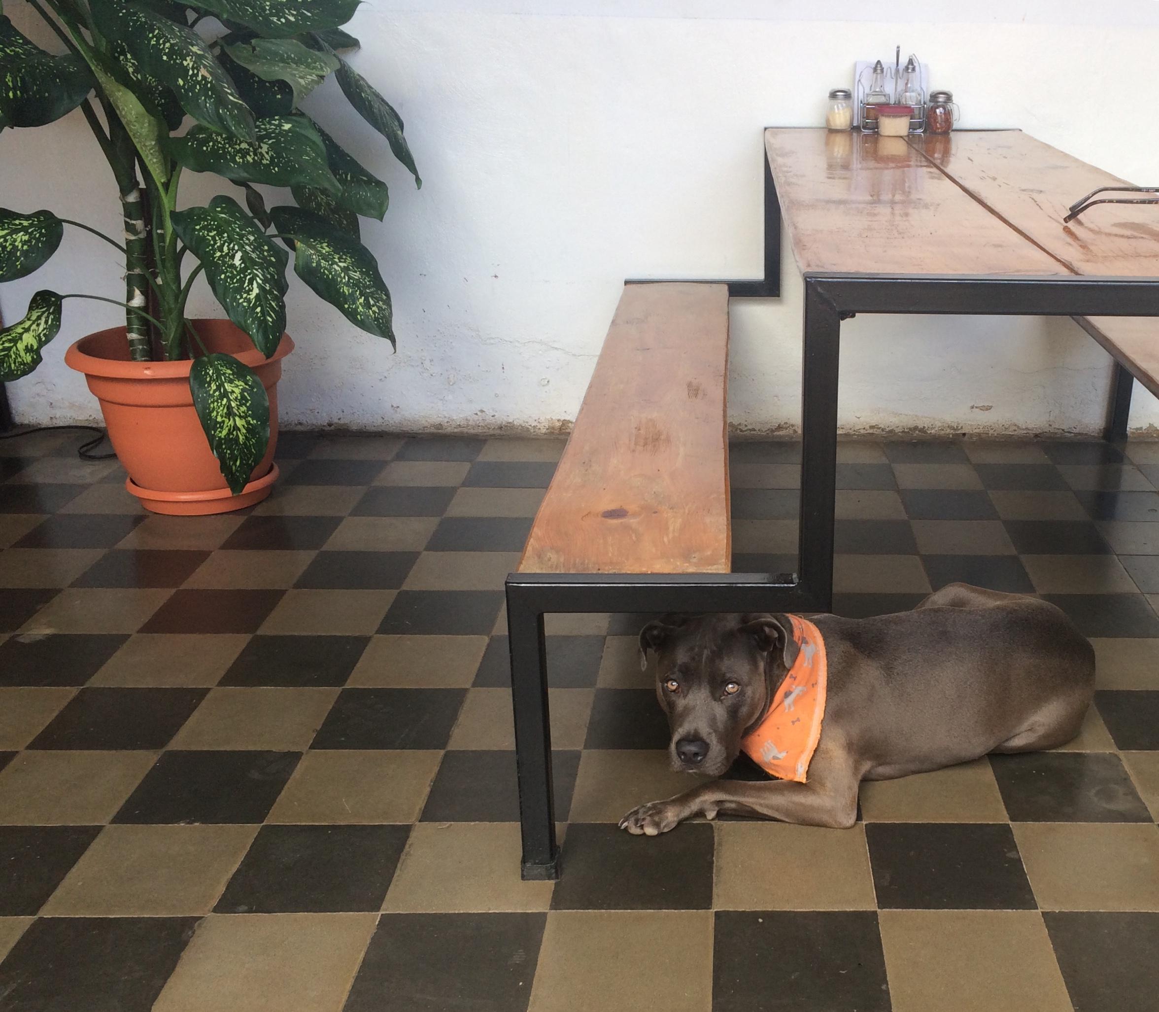 Pan de Vida in Granada, Nicaragua