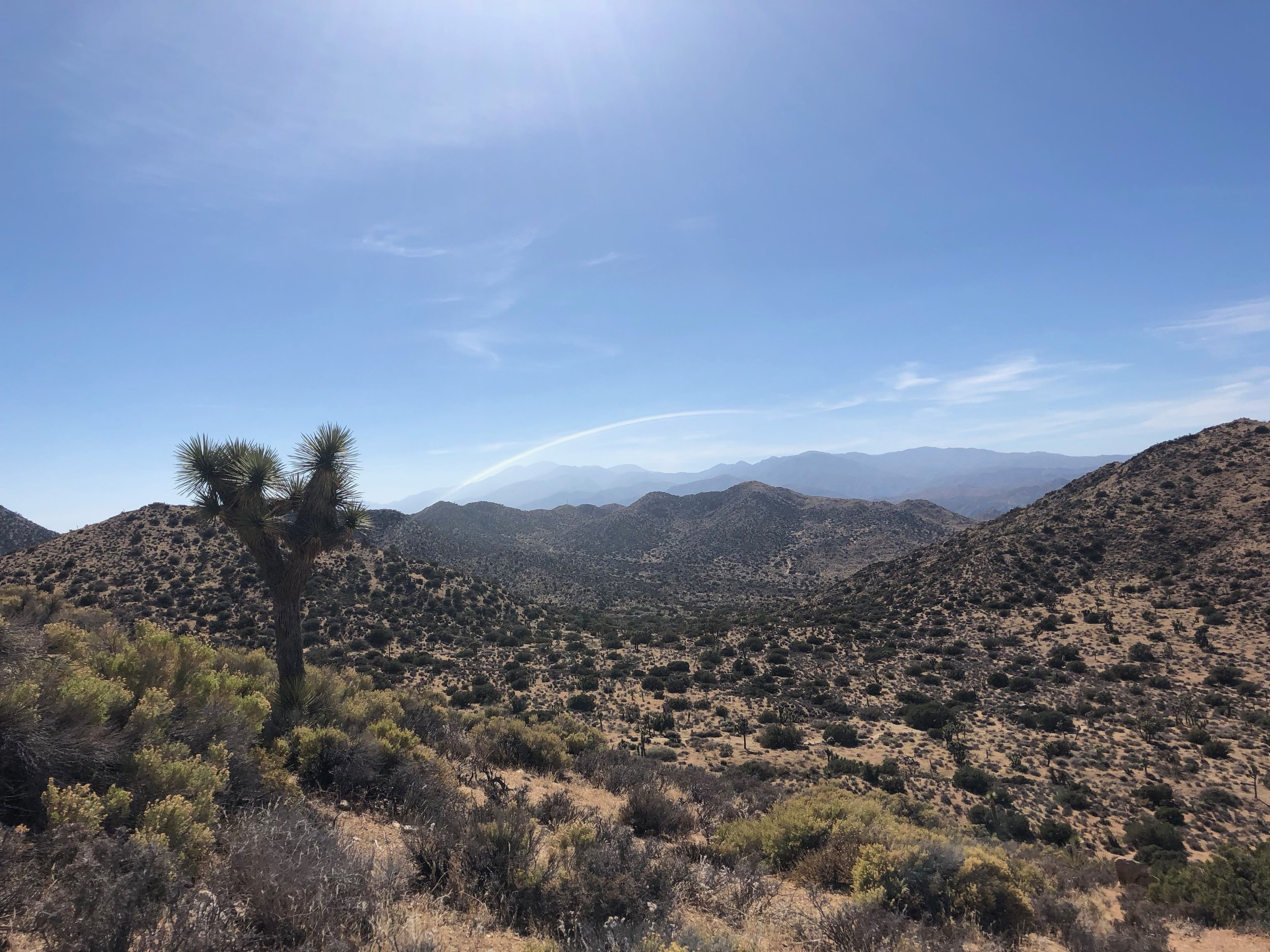 Hi View Nature Trail Joshua Tree