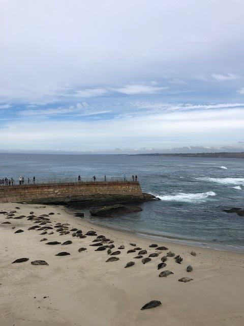 Sea lions in La Jolla