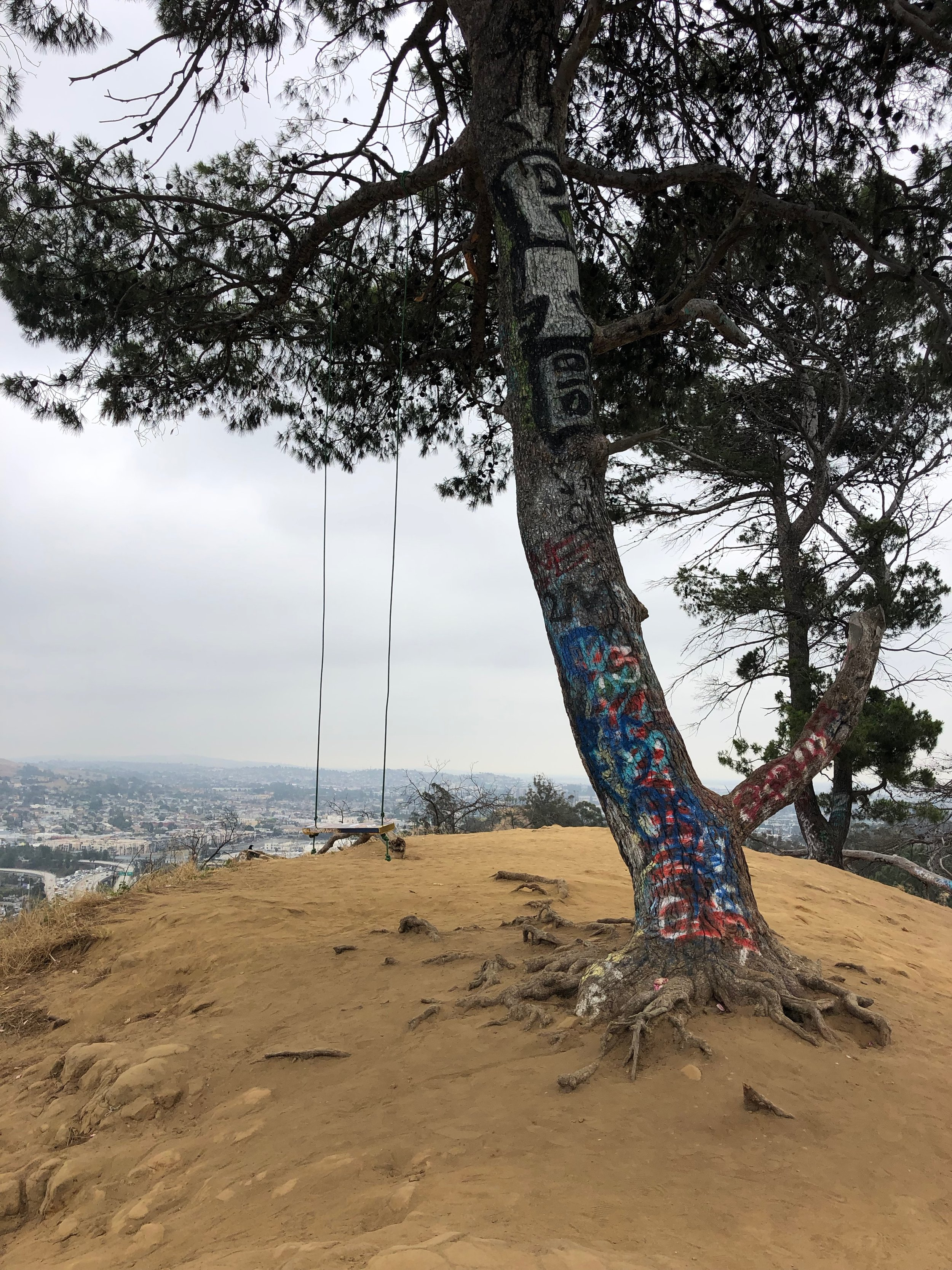 Elysian Park swing