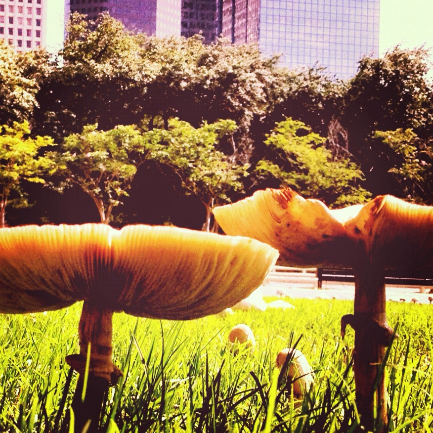 The lawn of Tranquility Park is littered with giant toadstools thanks to this rainy summer. I'm sure the Urban fairies are happy to have some shade from the scorching heat.
