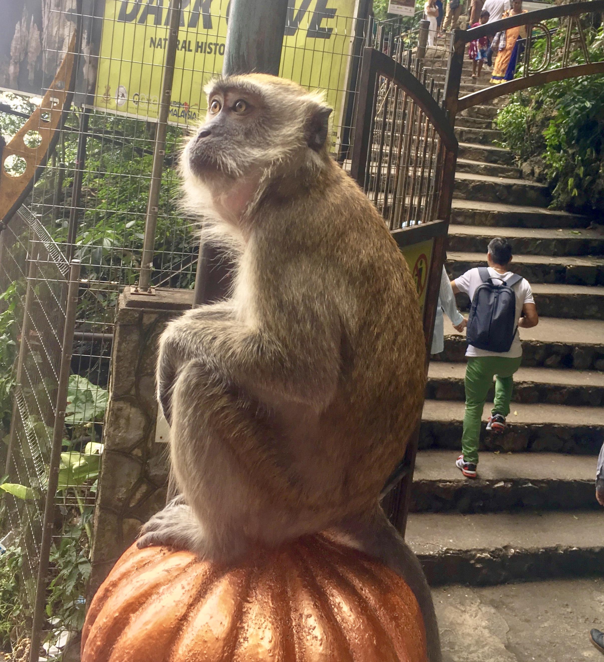 KL.monkey.jpg