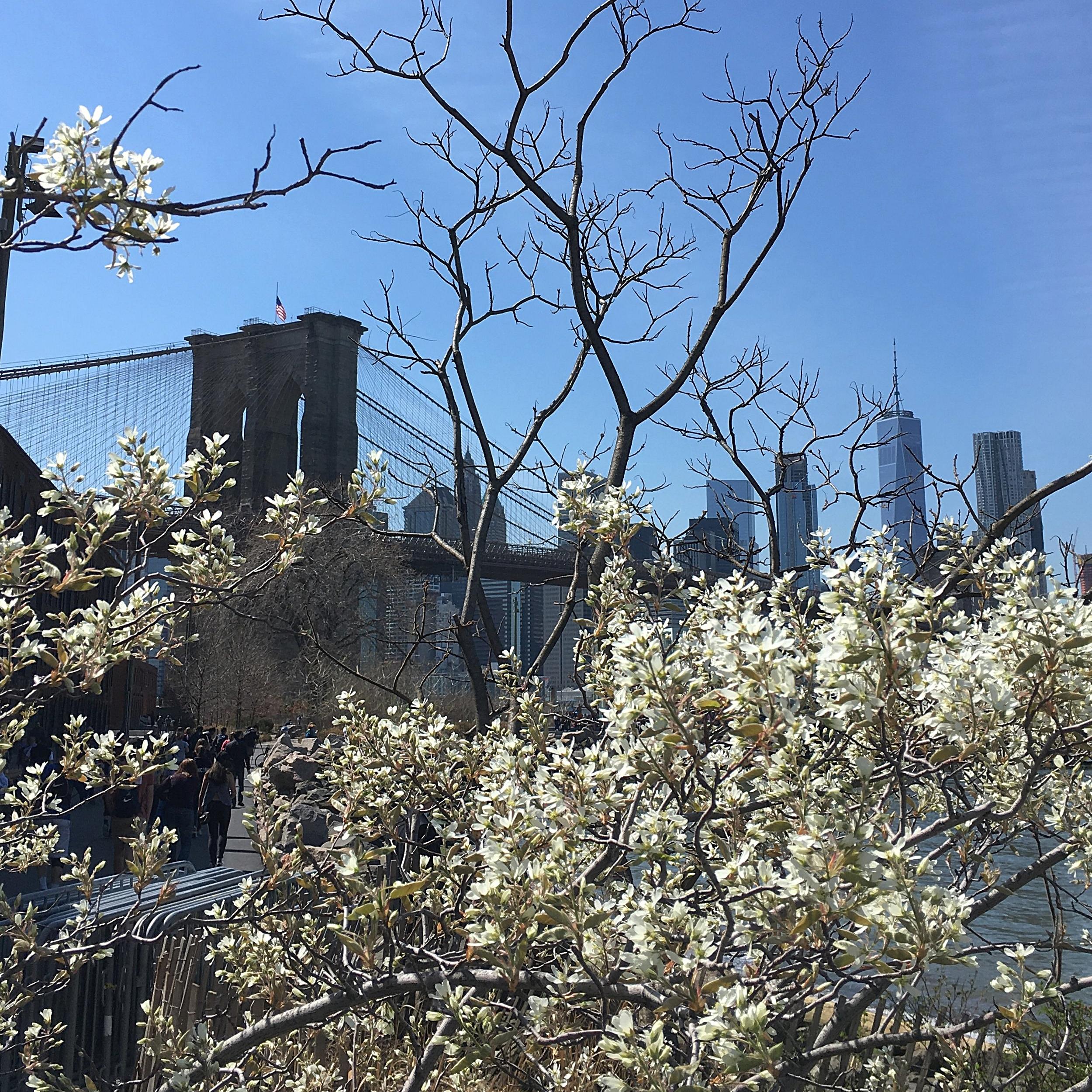 New York skyline & a happy tree