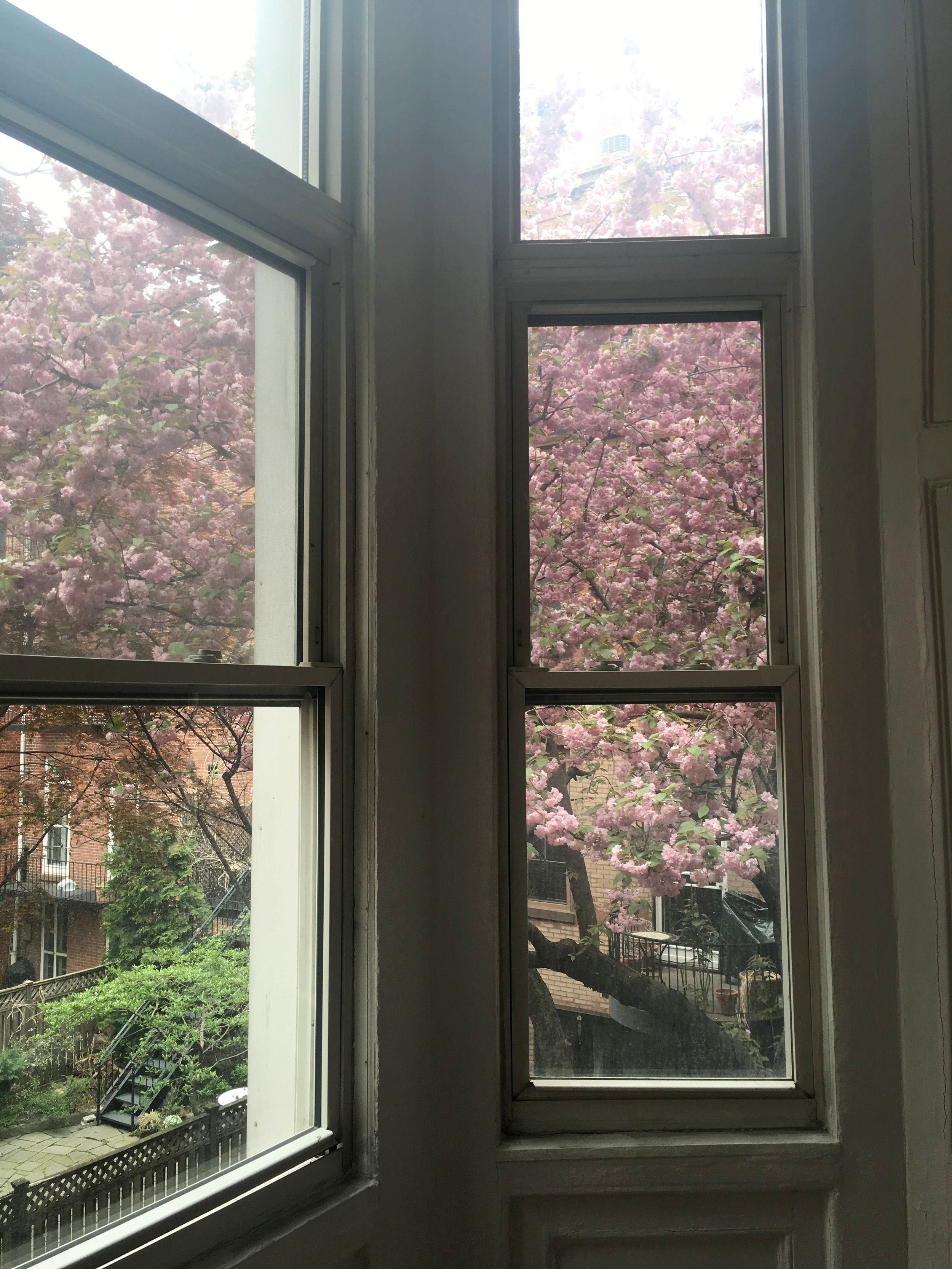 NYC apartment hunting: The one that got away - Quirky, high ceilings and gorgeous trees outside. We were just too late, so a new home for someone else...