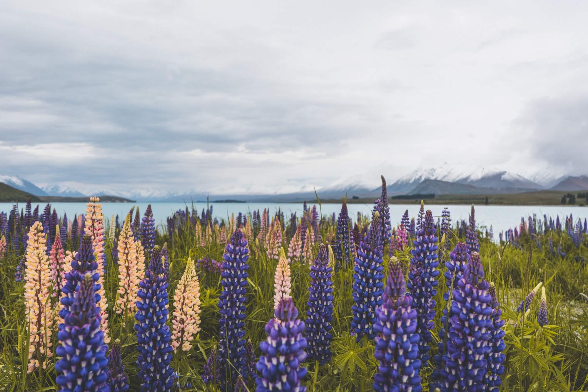 Lake Tekapo, South Island, New Zealand