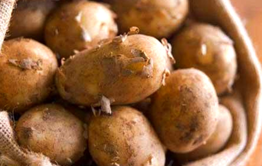 New season potatoes