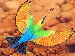 For an incredible birding expedition- the okavango delta