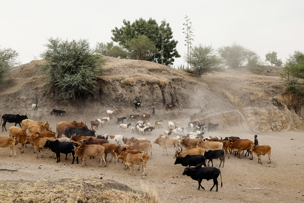 A young boy herds his cattle out of the watering hole along the road, somewhere on the long drive out to Mwanza.
