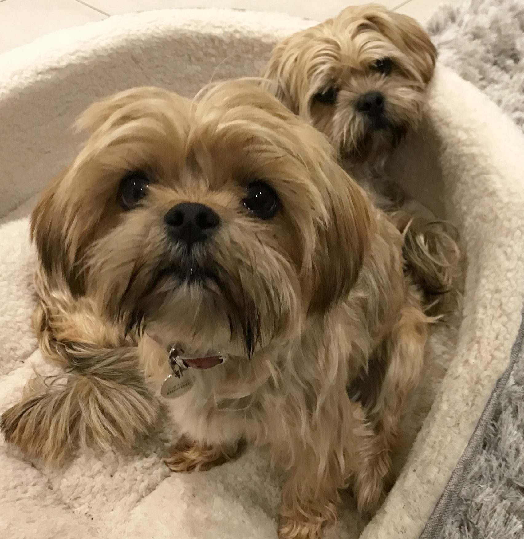 Booboo and Yogi