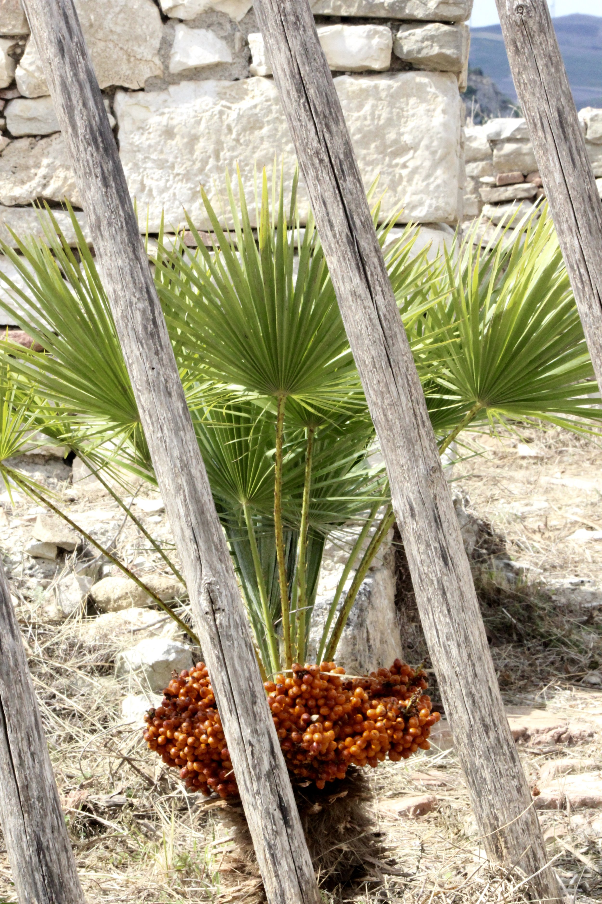 Not many plants in this area, just an occasional little palm like this beaut here.