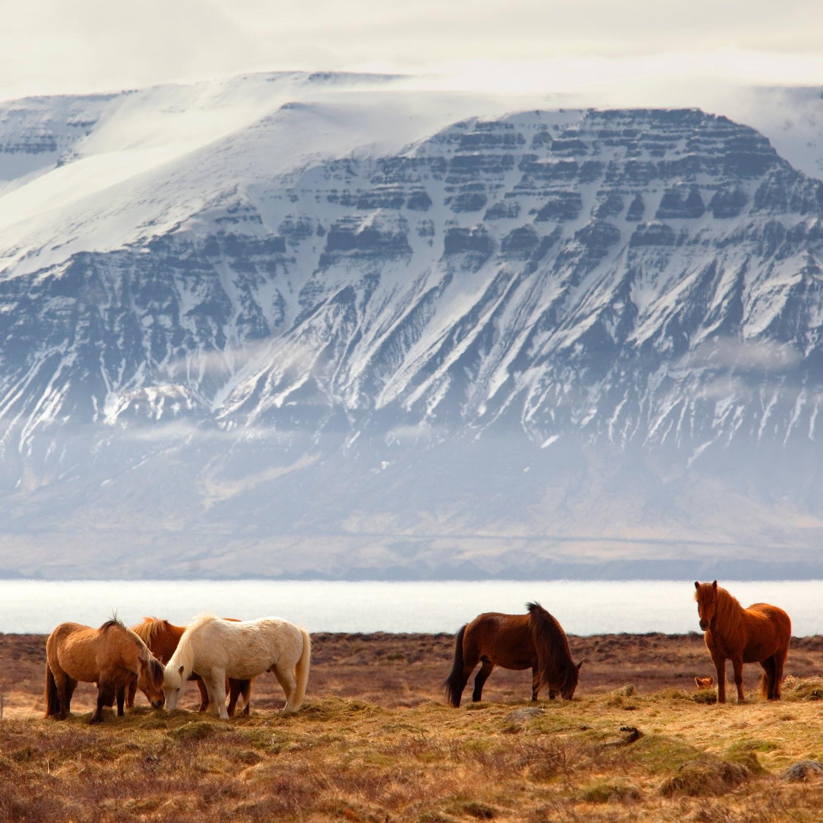 Iceland South Coast  -