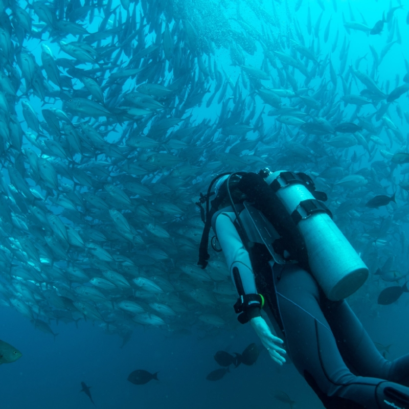 Scuba Diving -
