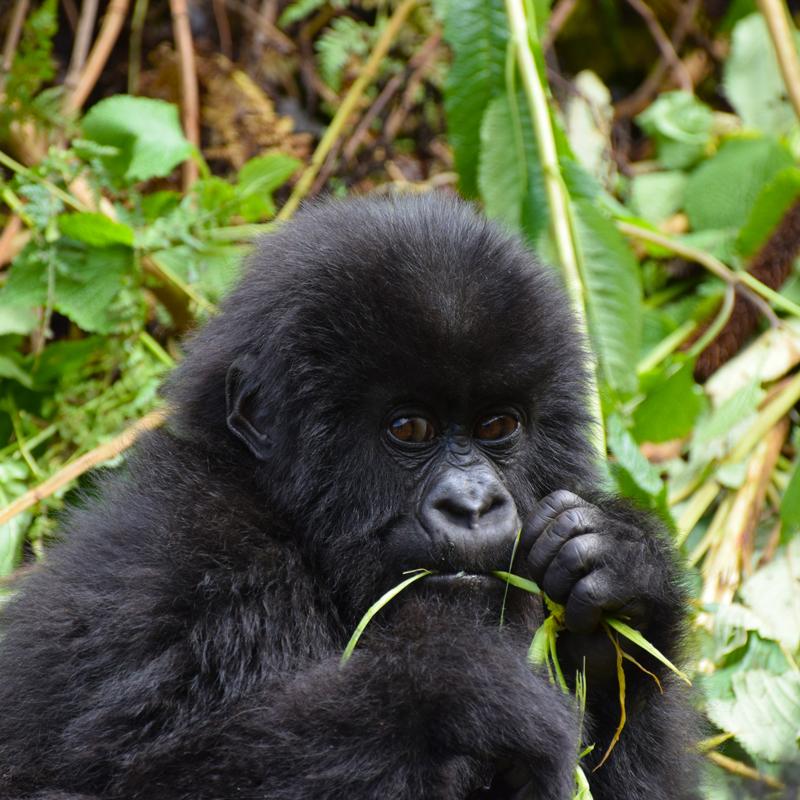 Gorilla Trekking & Nile Rafting Adventure -