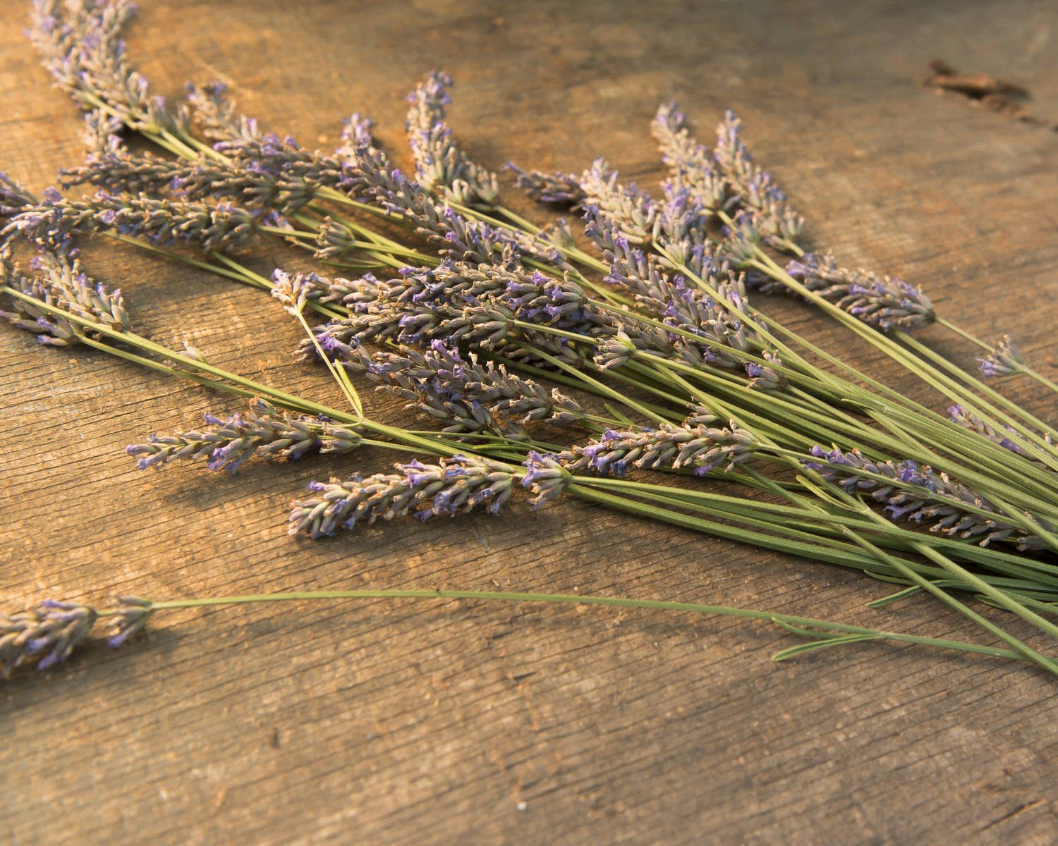 Seattle Lavender French Provincial Wedding Outdoor Casual Woodinville Winery_.jpg