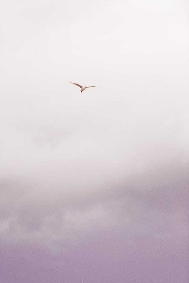 Bird at sunset on Cannon Beach, OR