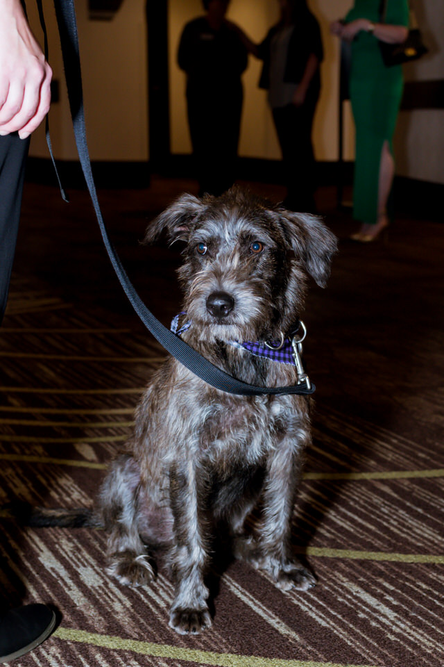 Kitsap Humane Society Animal Krackers 2018 Gala Christina Servin Photographs-40.jpg