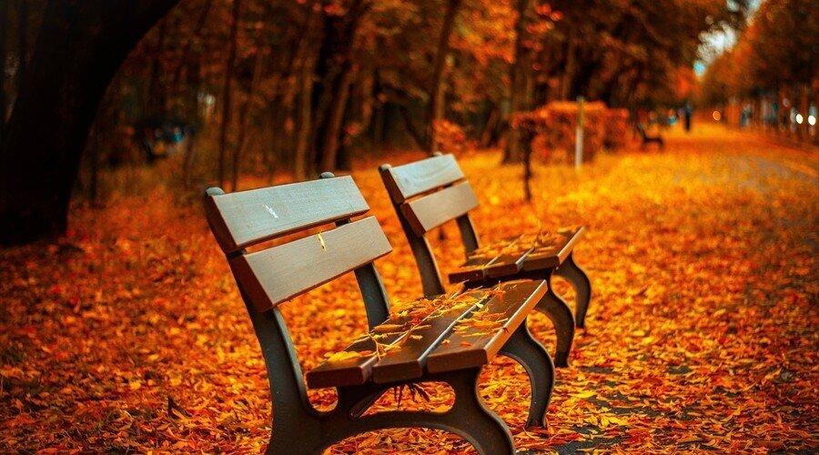bench560435.jpg