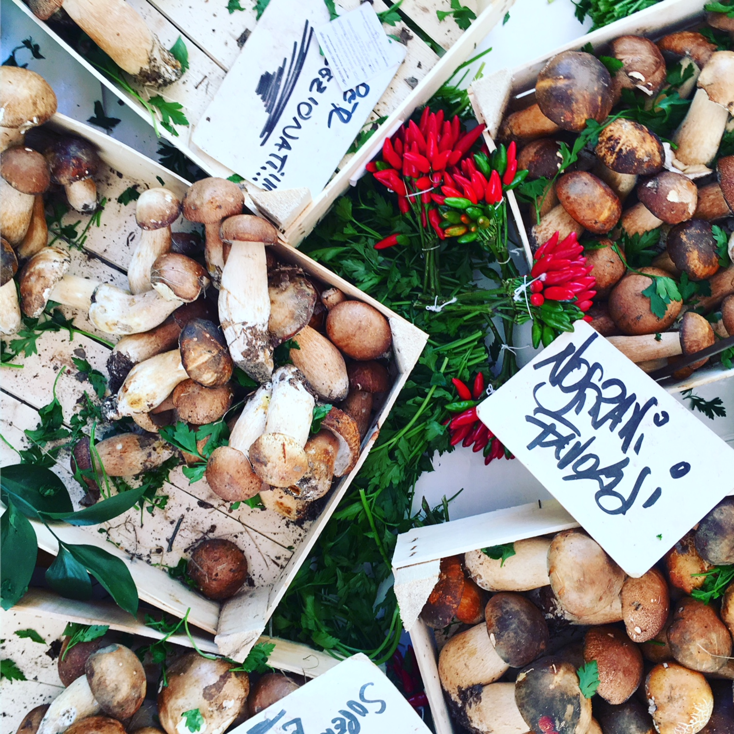 Porcini Mushrooms at Market in Italy with signs.JPG