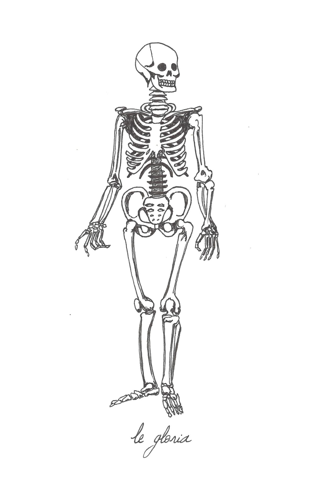 33 squelette-gloria.png