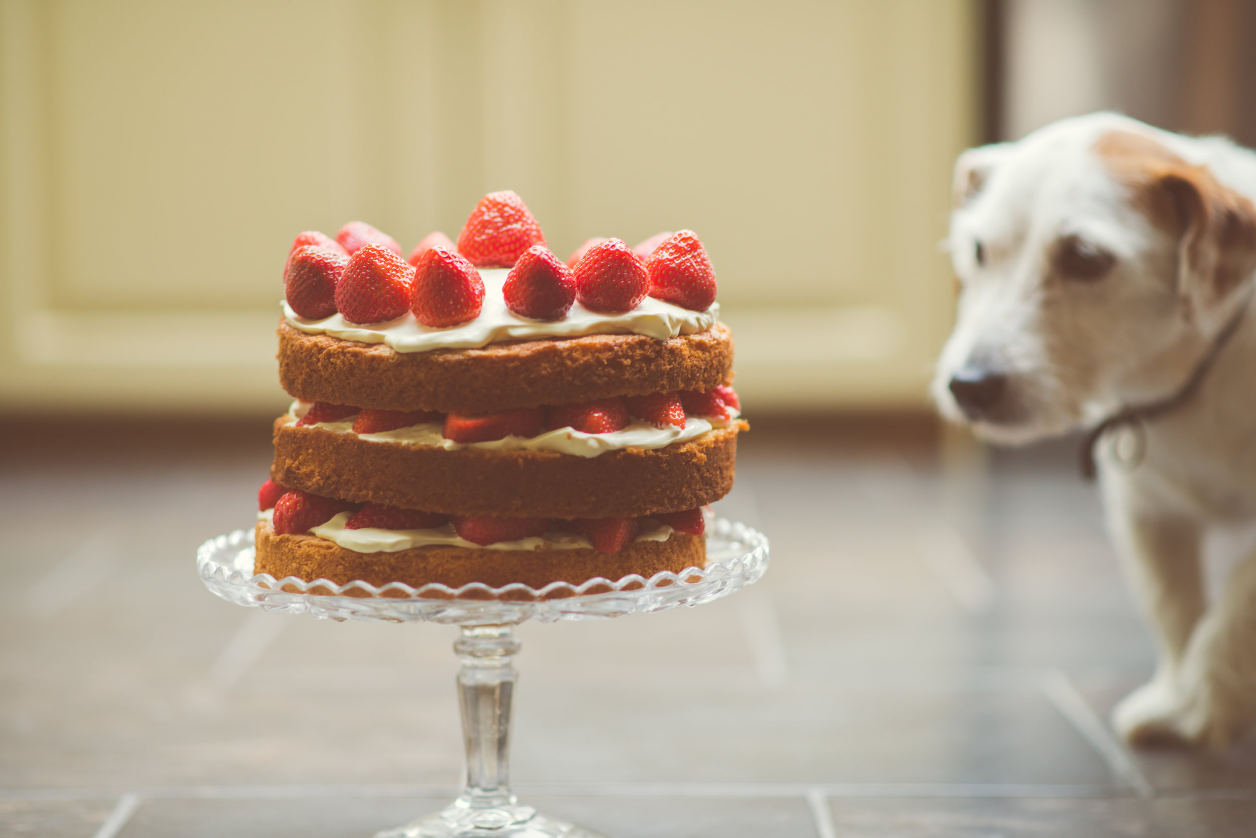 Fresh-Strawberry-Cream-Cake-With-Interested-Dog.jpg