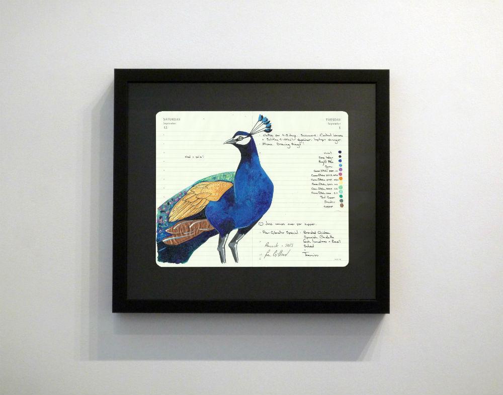 Peacock by Fran Giffard