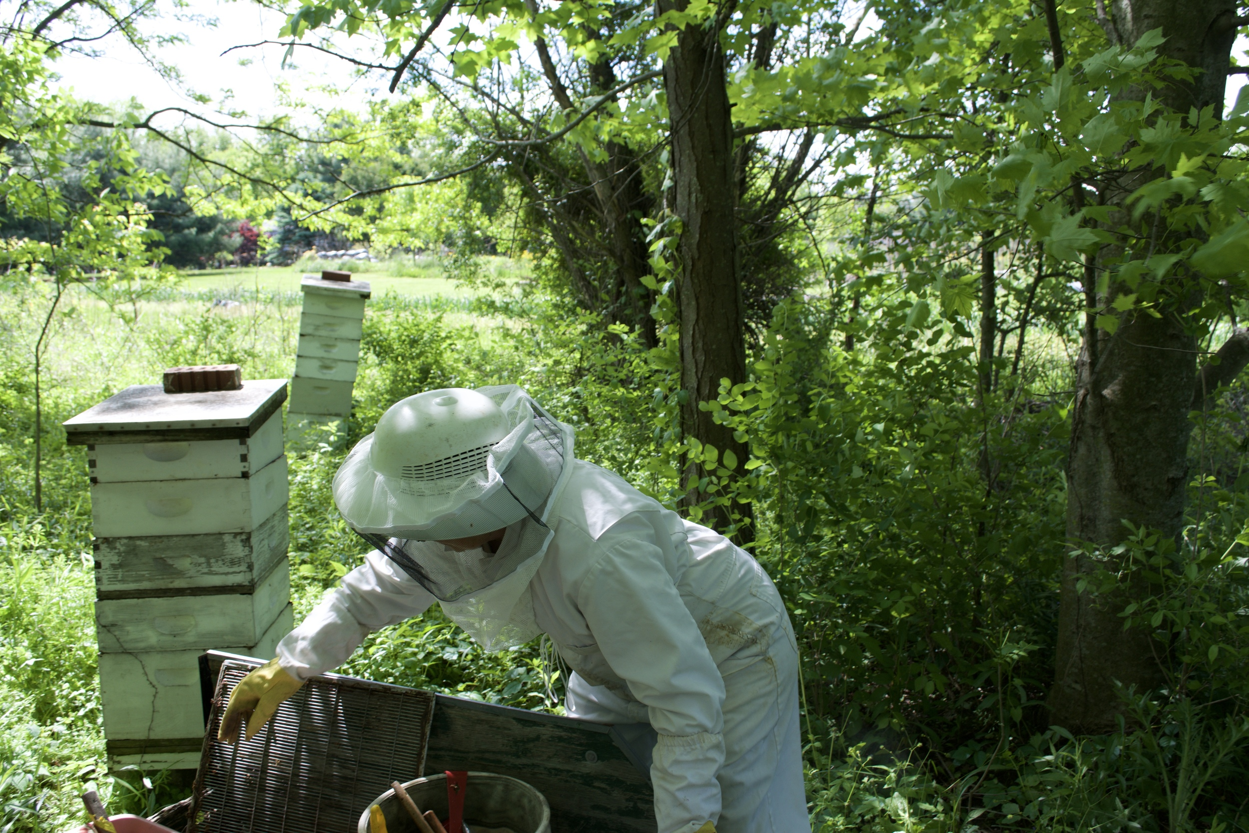 Beekeeping with Garden Patch Produce