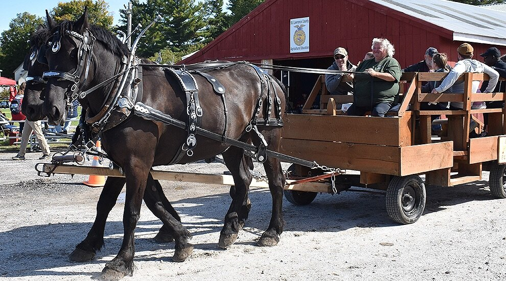 Bango Valley Percherons in Richville offered wagon rides to everyone who attended the 8th Annual Gouverneur Pumpkin Festival. (photo by Jessyca Cardinell)