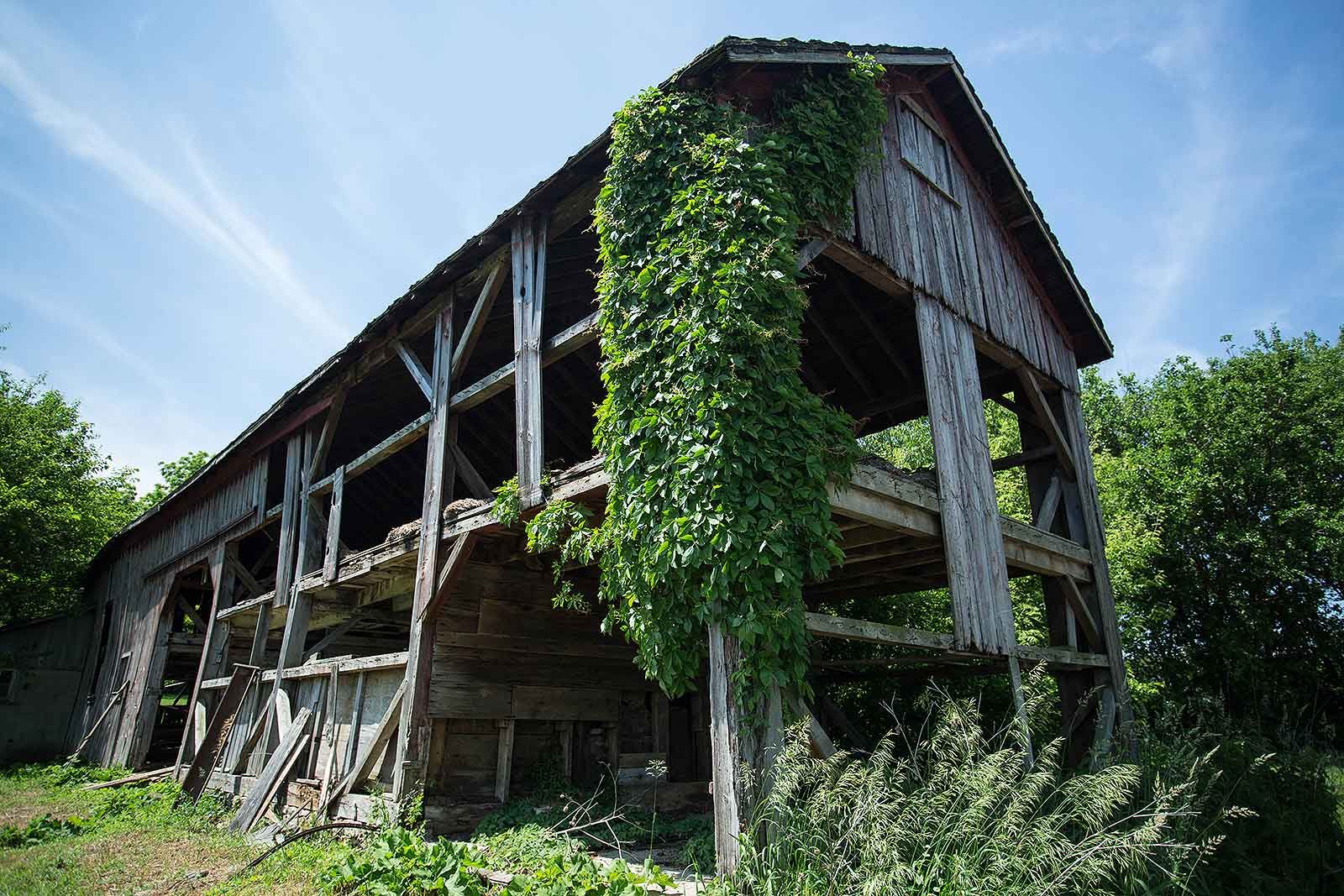 Over time, these wood barns were subjected to extreme temperatures, wind and rain.