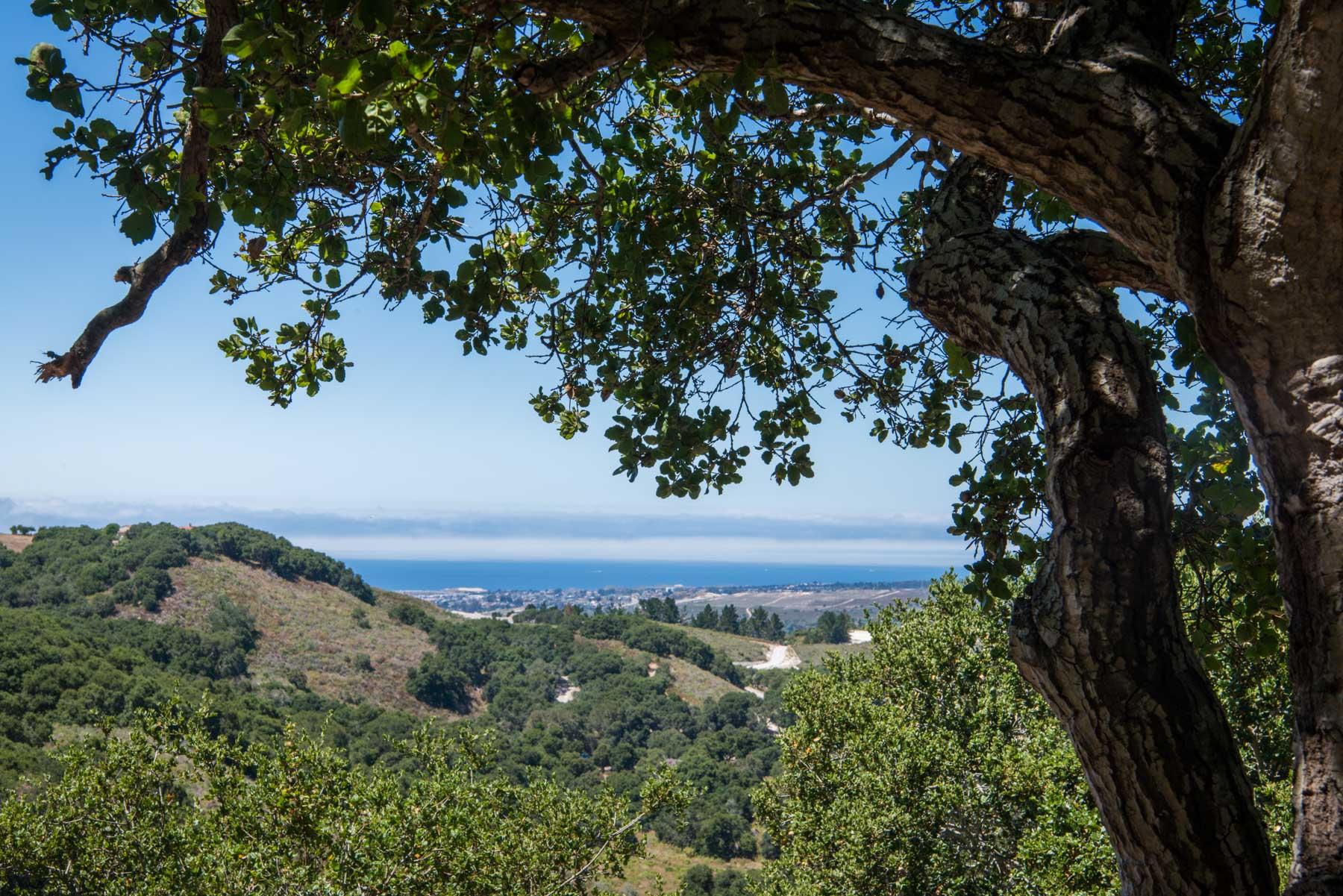 View-TreesPacific-min.jpg