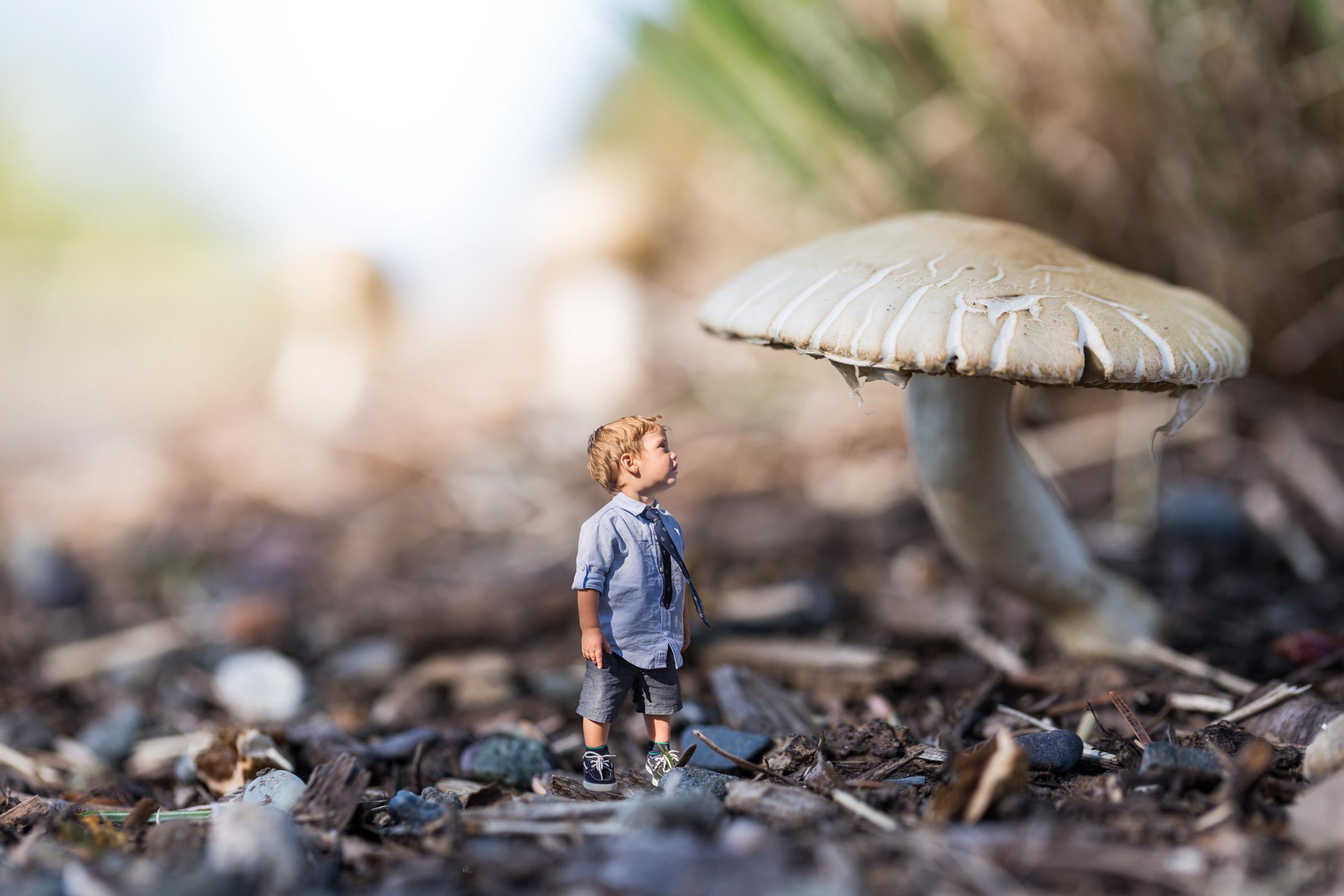 Healdsburg_Mushroom.jpg