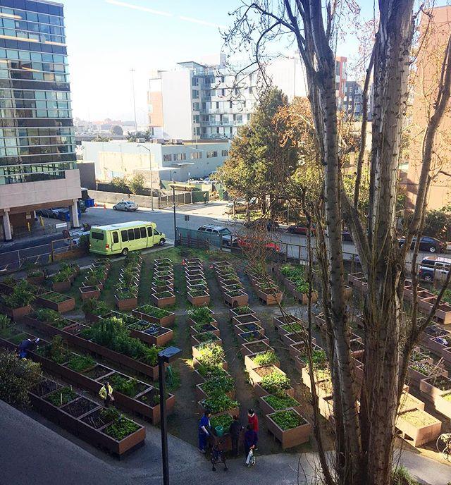 I've had worse views... love it his community garden! #windowseat #deskview #garden