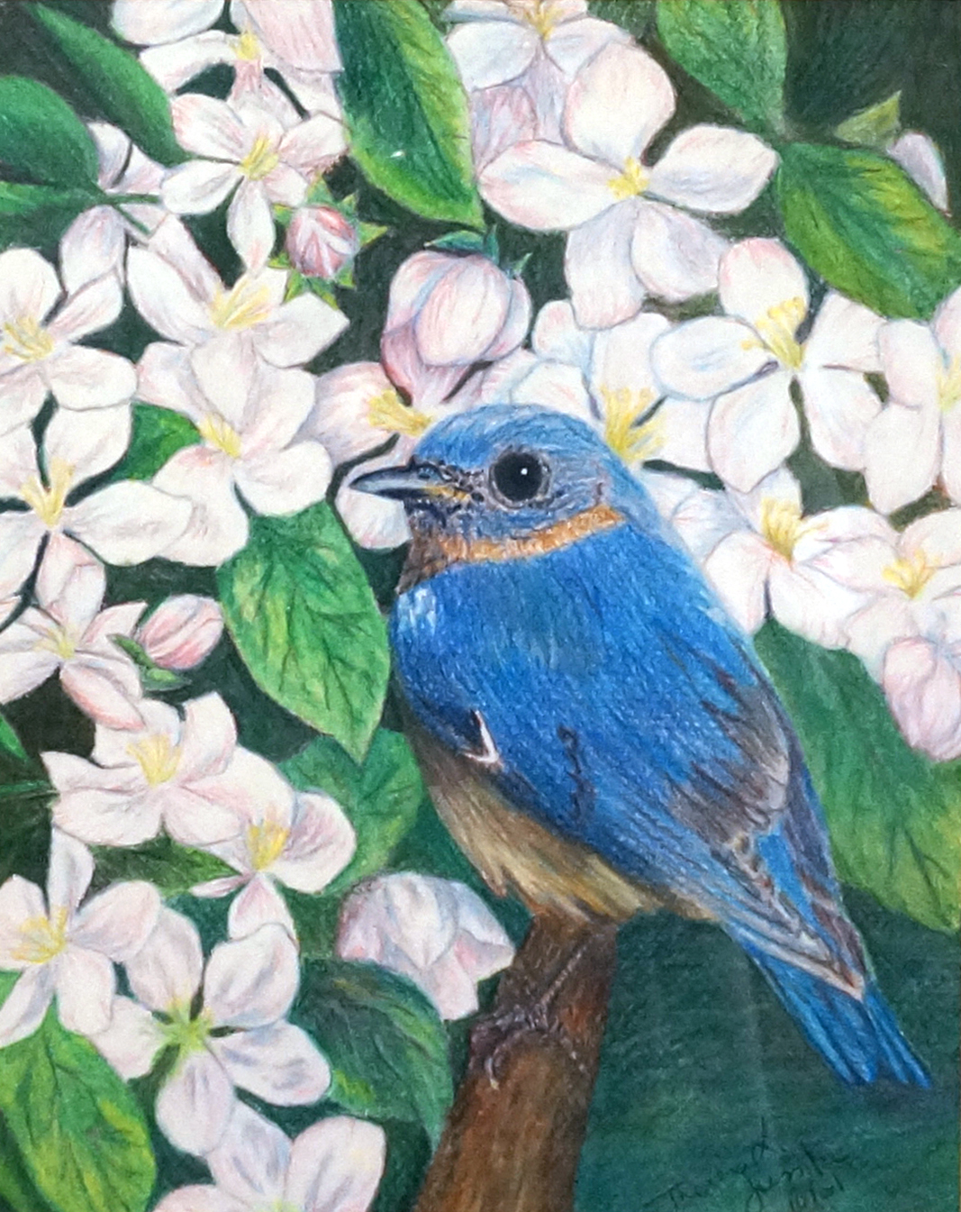 Blossom and Bird , 2001, colored pencil, 18 x 20 inches (framed)