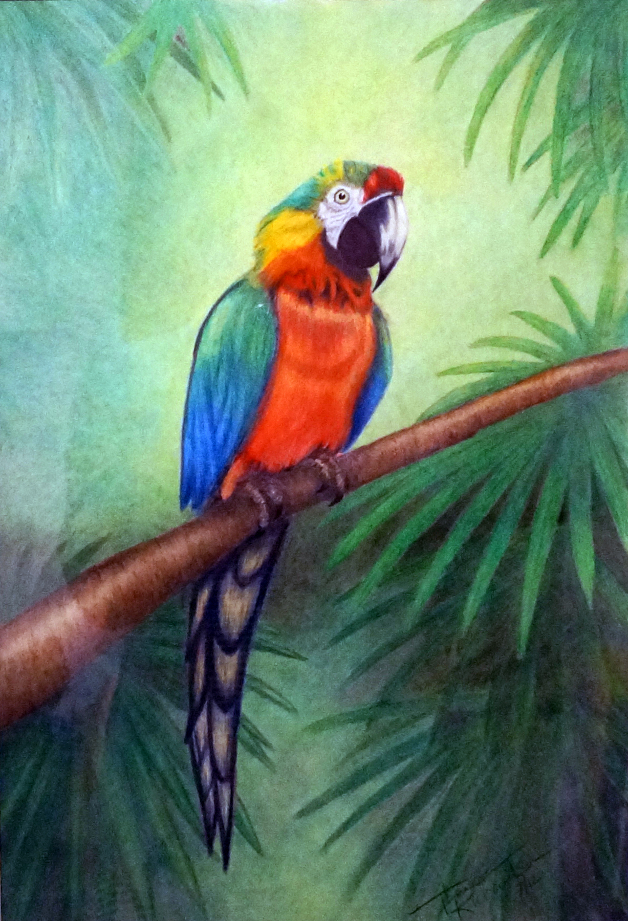 Parrot , 2012, colored pencil, 18 x 24 inches (framed)