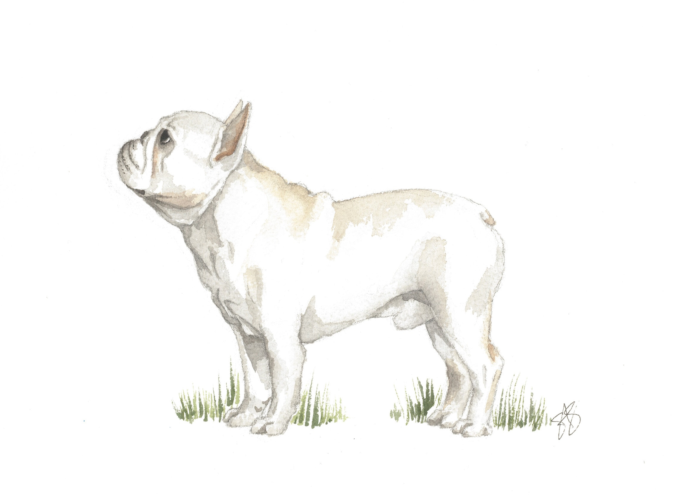 FrenchBulldog.jpg