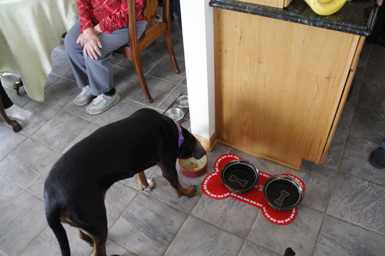 Frank Michna's dog, Sophie, refuses to drink water from the taps in his Caledonia home. Michna said the dog sniffs the tap water and then drinks instead from a bowl filled with bottled water. A study by the environmental advocacy group, Clean Wisconsin, linked pollution in Michna's and hundreds of other wells to buried coal ash from the nearby We Energies Oak Creek Power Plant.