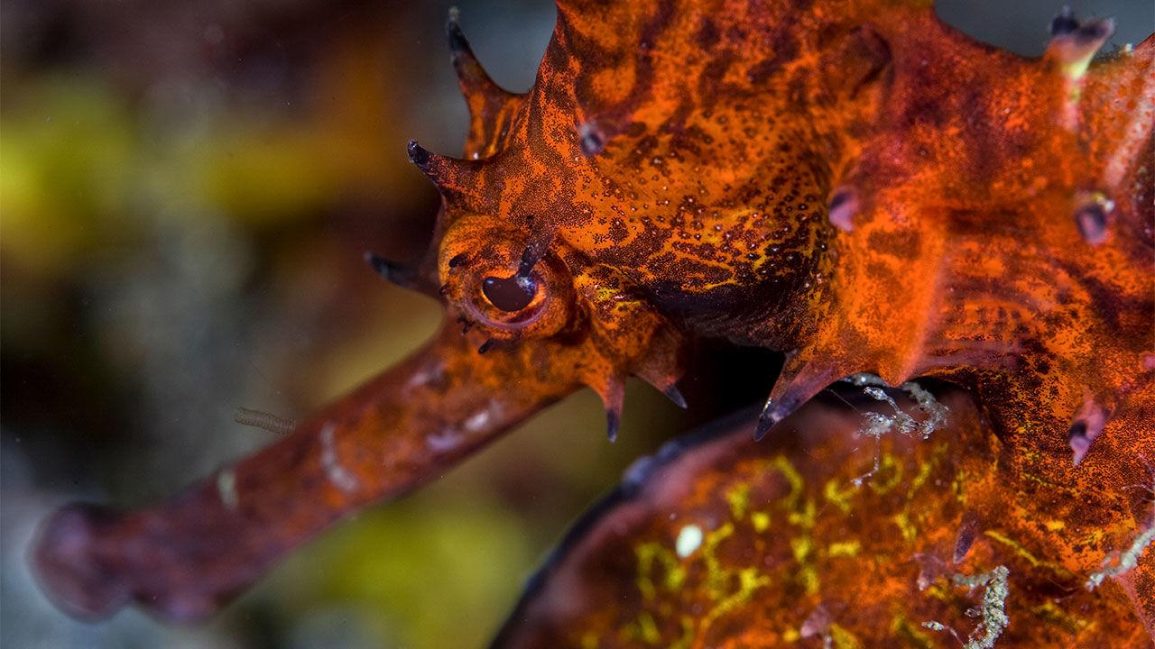 Copyright:WaterFrame/Alamy Stock Photo