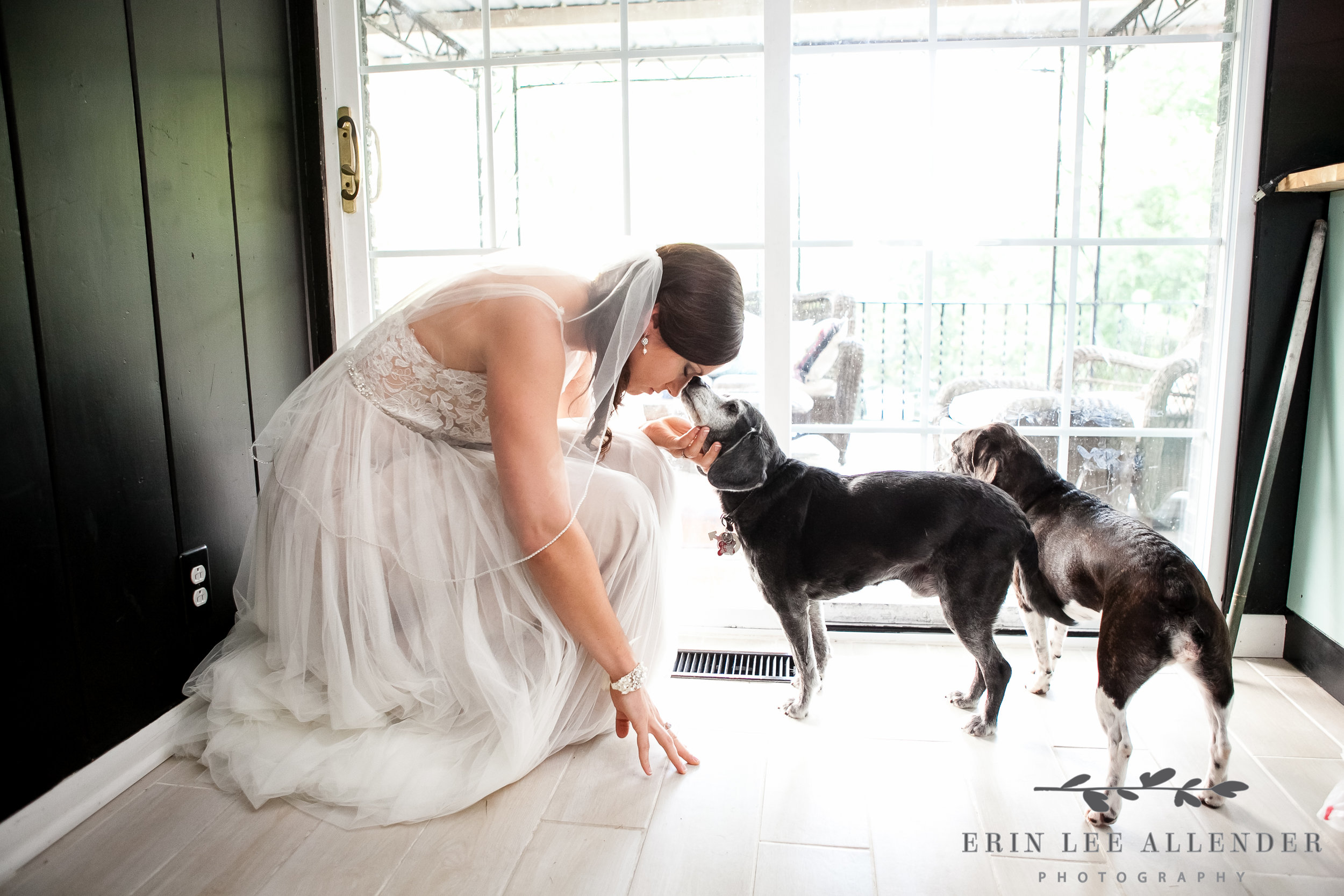 Bride_With_Dogs