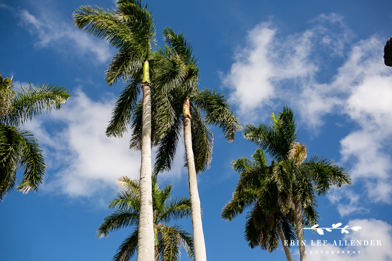 Palm_Trees_Against_The_Sky