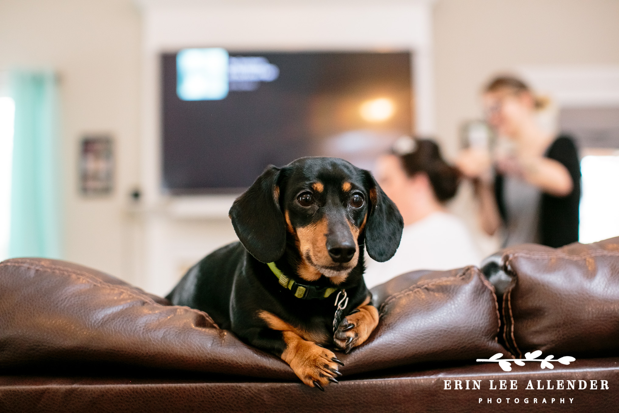 Dachshund_At_Wedding