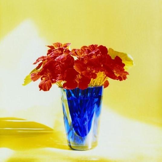 Peter C. Jones,  Empress Nasturtiums , 2005. Catalogue for  KMR Arts  Exhibition: Peter C. Jones, 18 Still Lives , June 6 - July 25, 2015. Catalogue Design by Allison Wucher, Silverpoint Fine Art
