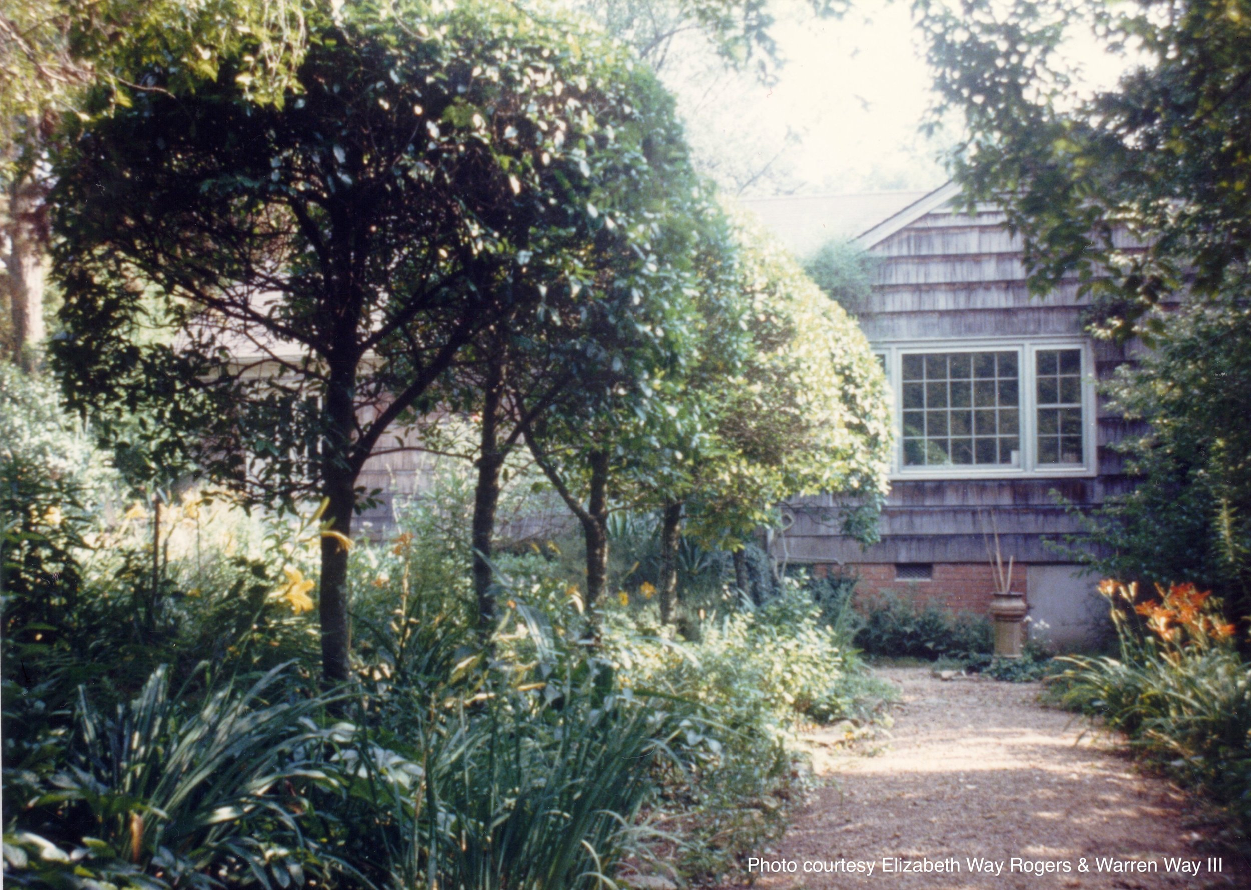 1965_ EL cherry laurel hedge.jpg