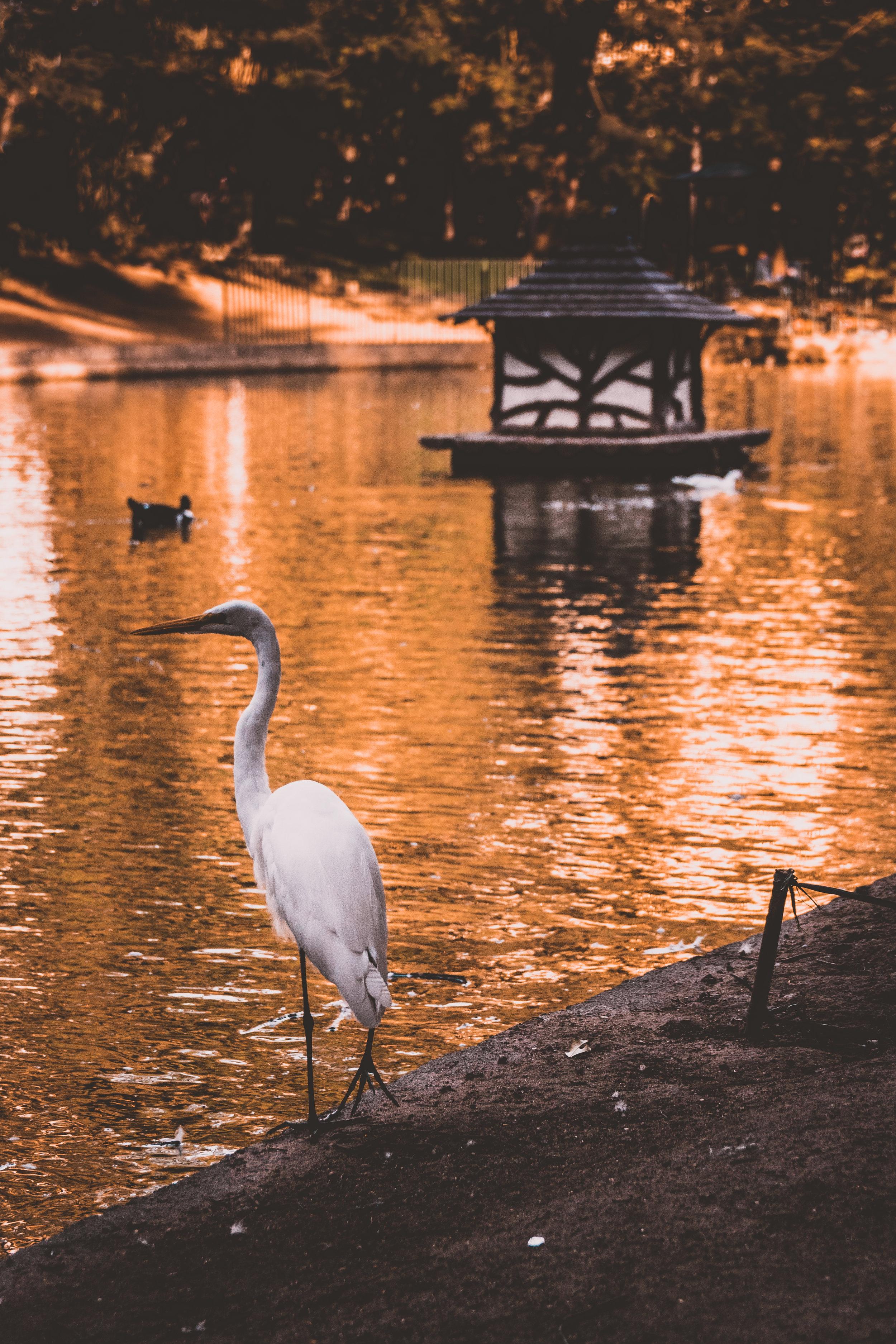 / Lake of gold