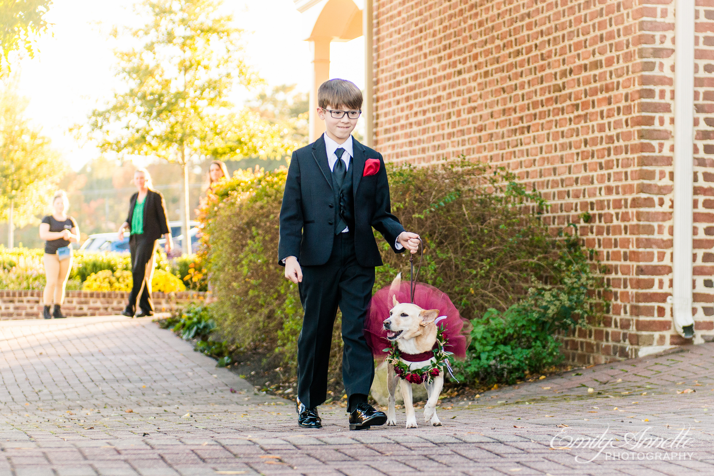 A ring bearer with a dog in a flower girl dress walking into the wedding ceremony at Willow Oaks Country Club in Richmond, Virginia