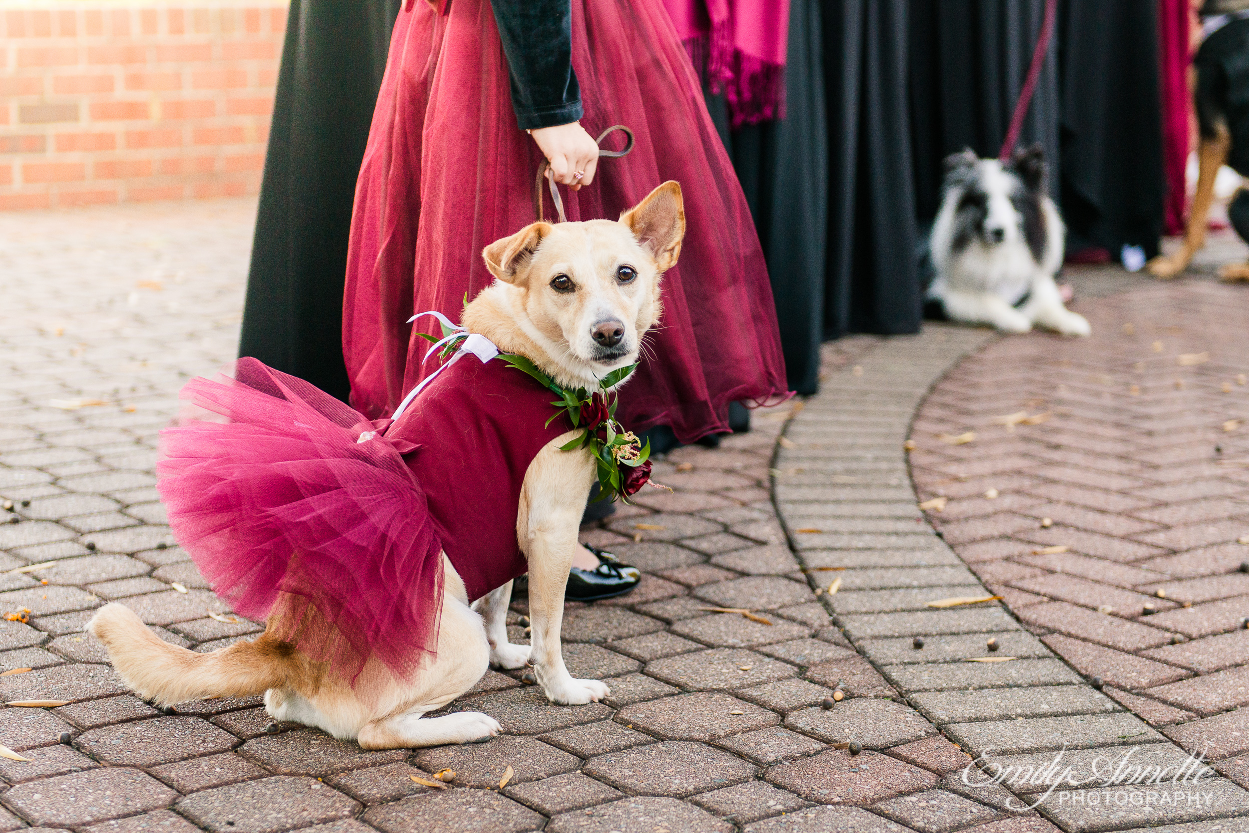 A dog in a flower girl dress during an outdoor wedding ceremony at Willow Oaks Country Club in Richmond, Virginia