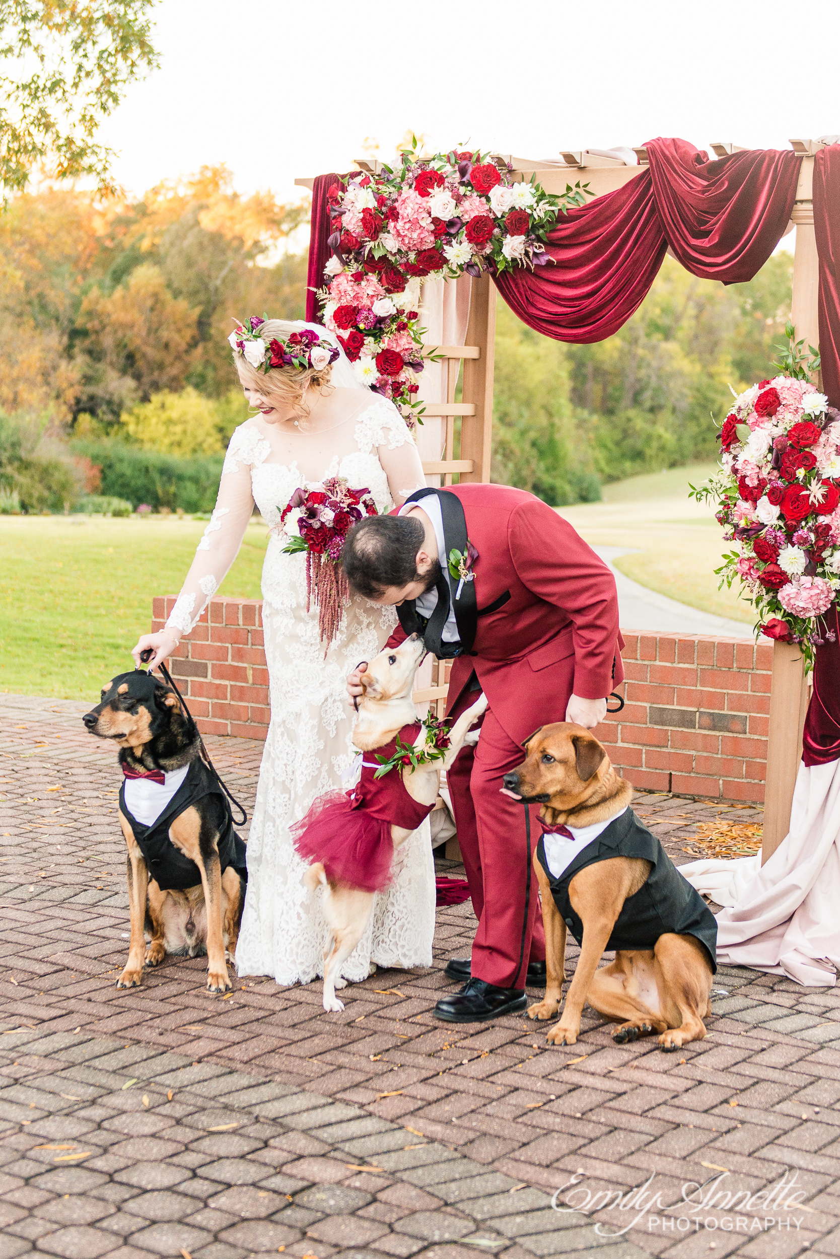 A bride and groom getting ready to take photos with their dogs in dresses and suits as part of the wedding party after an outdoor wedding ceremony at Willow Oaks Country Club in Richmond, Virginia