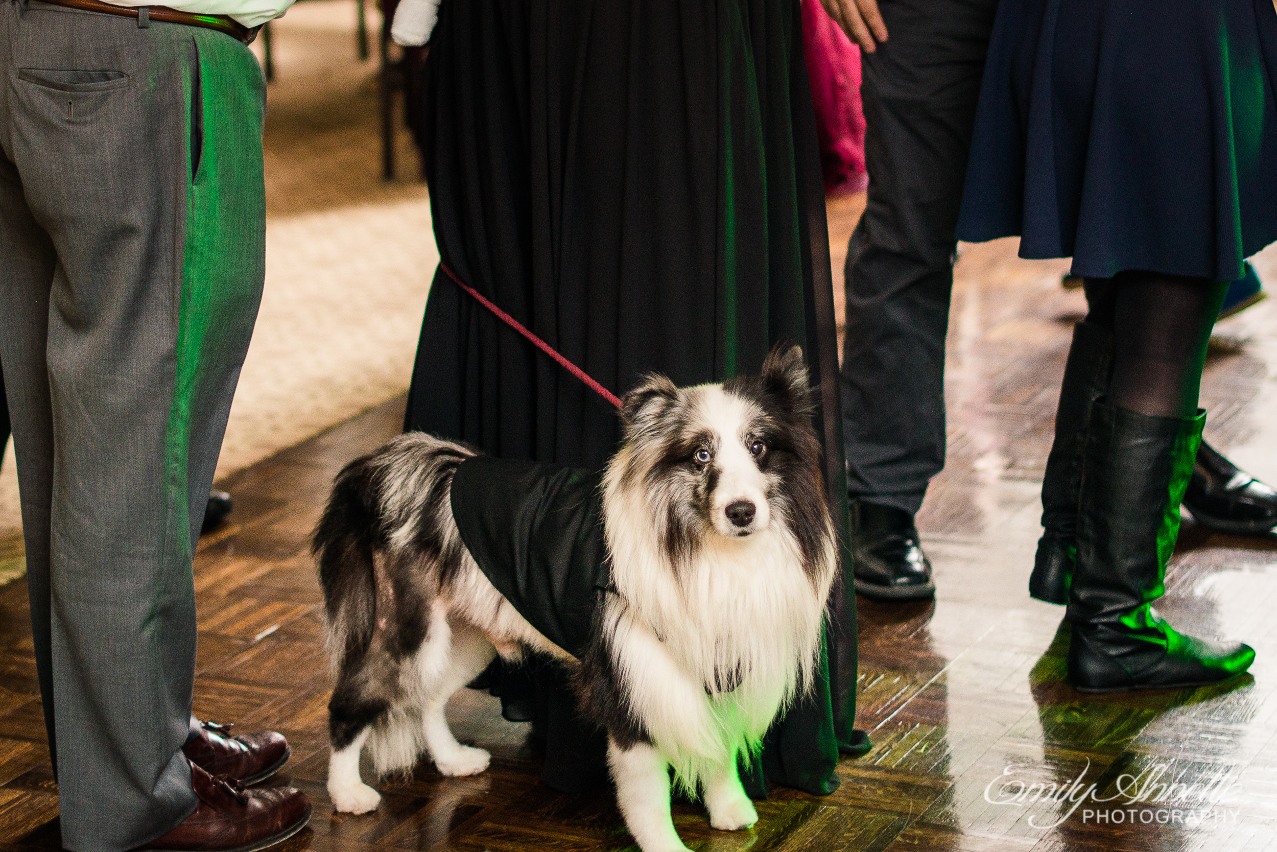 A service dog during a wedding reception at Willow Oaks Country Club in Richmond, Virginia