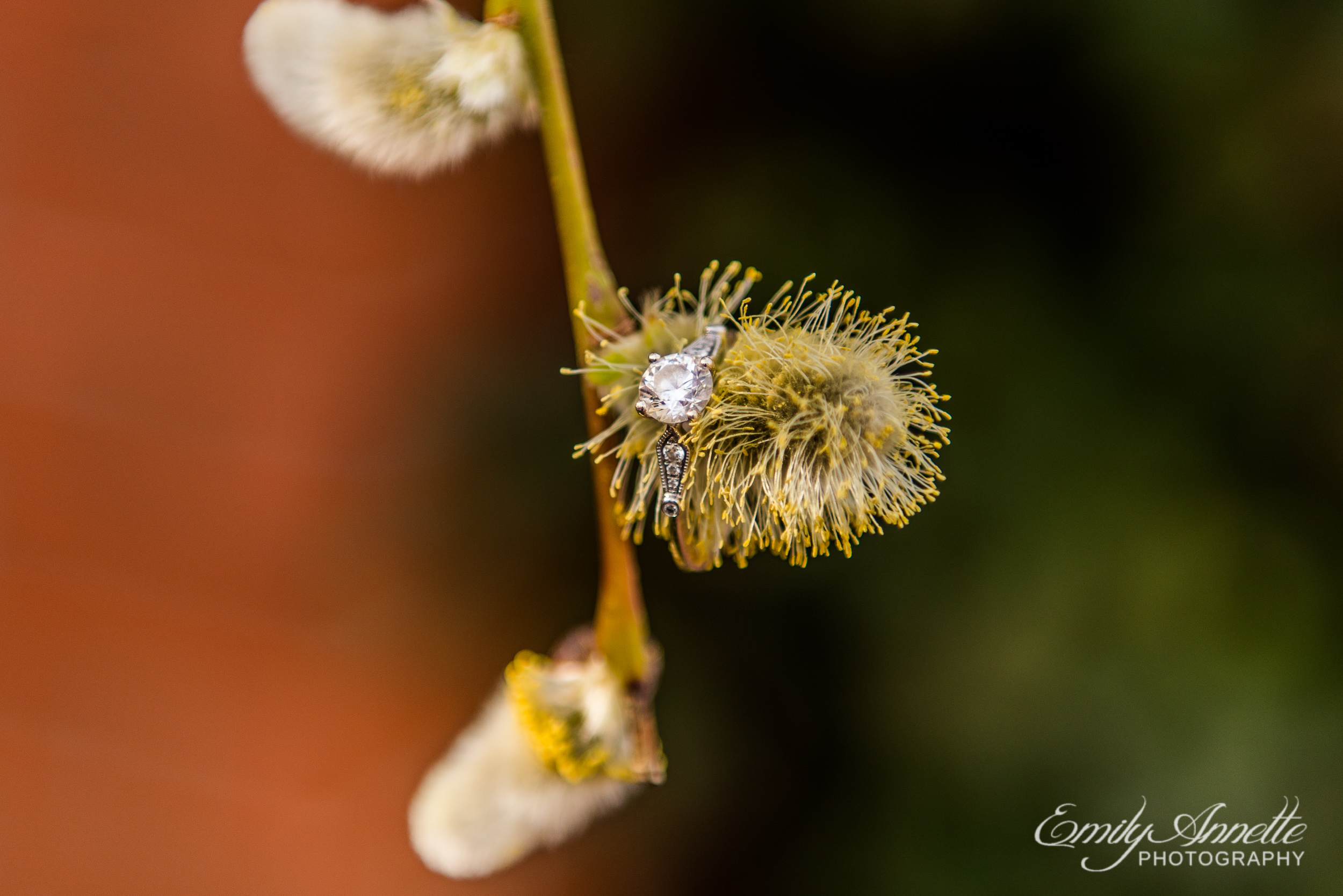 A diamond and silver engagement ring sits on fuzzy spring blooms in Old Town Alexandria, Virginia