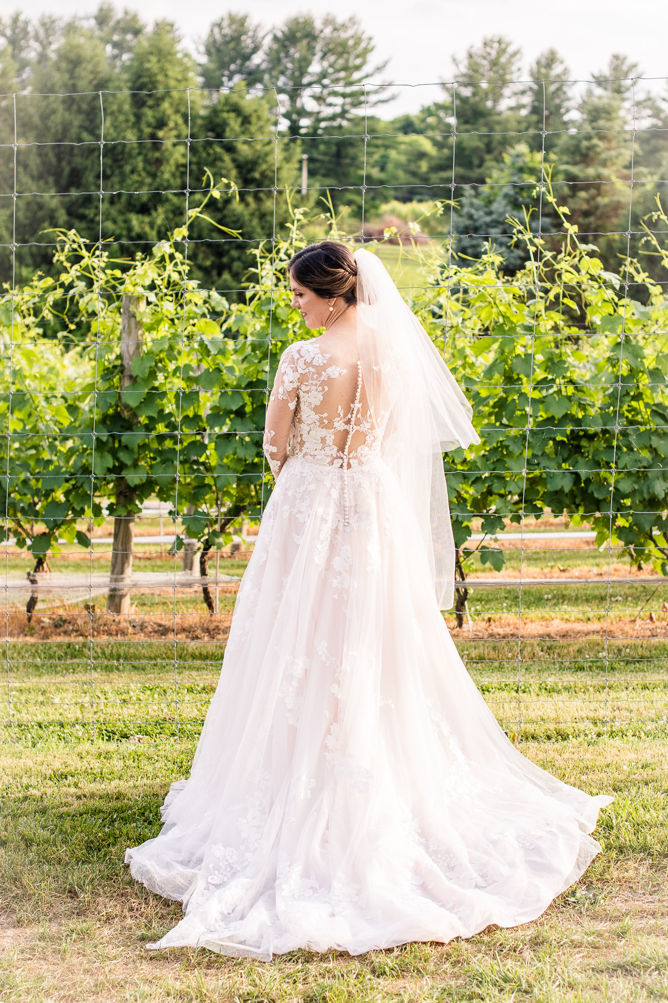 A classic bride in a modest lace wedding dress poses for a portrait showing off the back of her dress in the vineyards at The Barns at Hamilton Station Vineyard in Leesburg, Northern Virginia