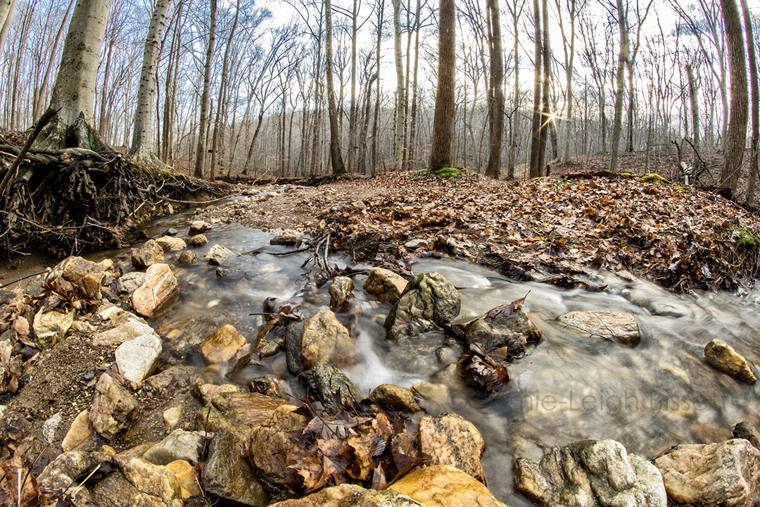20190106_cromwell_valley_park_rokinon_8mm_fisheye 002.jpg