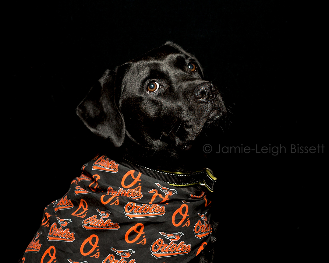 baltimore-pet-portraits-jamie-leigh-bissett-3.jpg